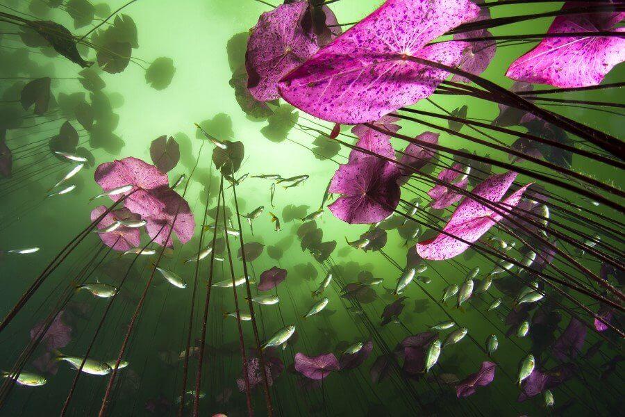 Podwodny blask, Christian Vizl (Meksyk)