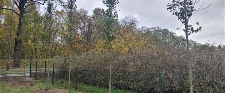 Świnoujście. Warszów. Posadzili 40 nowych drzew.
