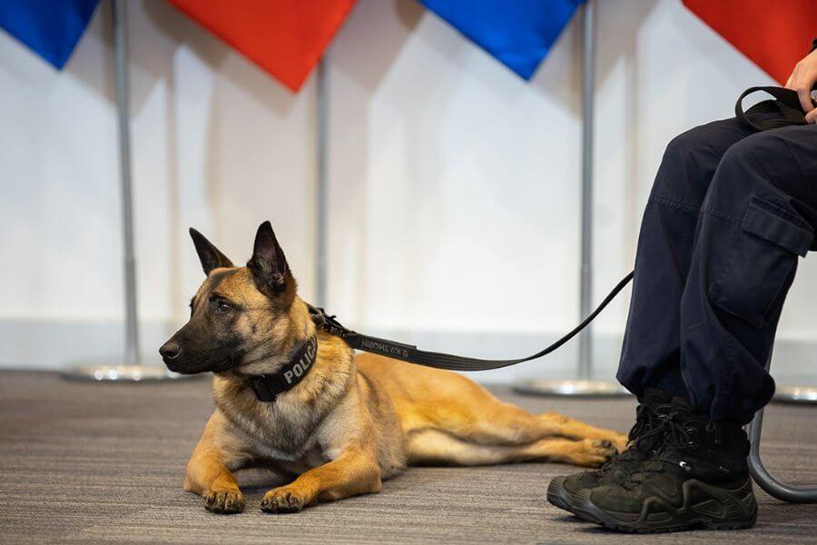 Dożywotnia opieka nad zwierzętami w służbach podległych MSWiA.