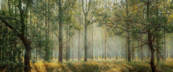 Światowy Dzień Lasów. Każdy z nas ma wpływ na ich kondycję.