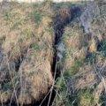 Zachodniopomorskie. Plaga bobrów niszczy wał przeciwpowodziowy w małej wiosce Łojszyno w gminie Wolin.