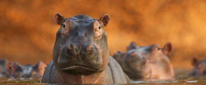 Rozlewisko hipopotamów, David Fettes (Wielka Brytania)