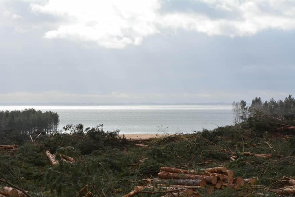 Złoża bursztynu na Mierzei Wiślanej oceni Ministerstwo Środowiska