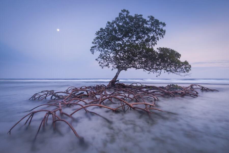 Strażnik plaży, Mac Stone (USA)