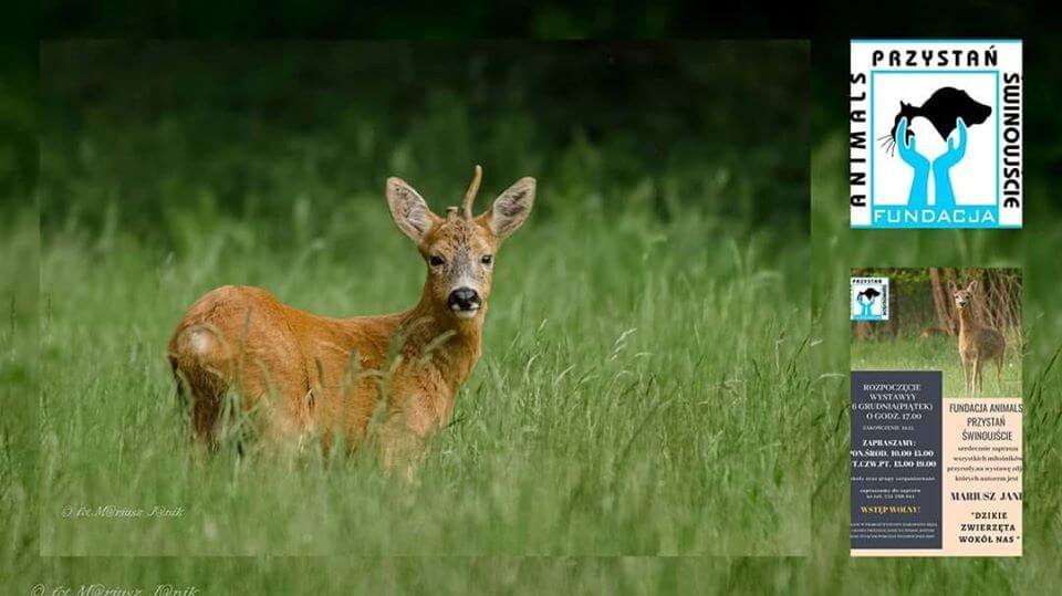 Wystawa zdjęć dzikich zwierząt okolic Świnoujścia.