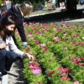 Świnoujście. Kwiaty na promenadzie. Dali przykład innym.
