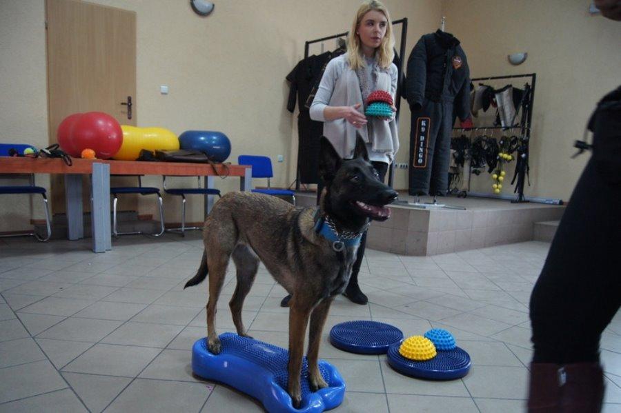 Wielbiciele psów po raz piąty spotkają się na Zachodniopomorskim Uniwersytecie Technologicznym