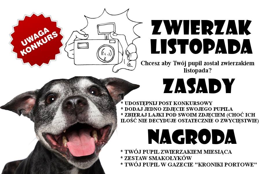 Konkursie fotograficzny ZWIERZAK LISTOPADA