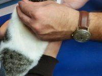 Fundacja Animals Przystań