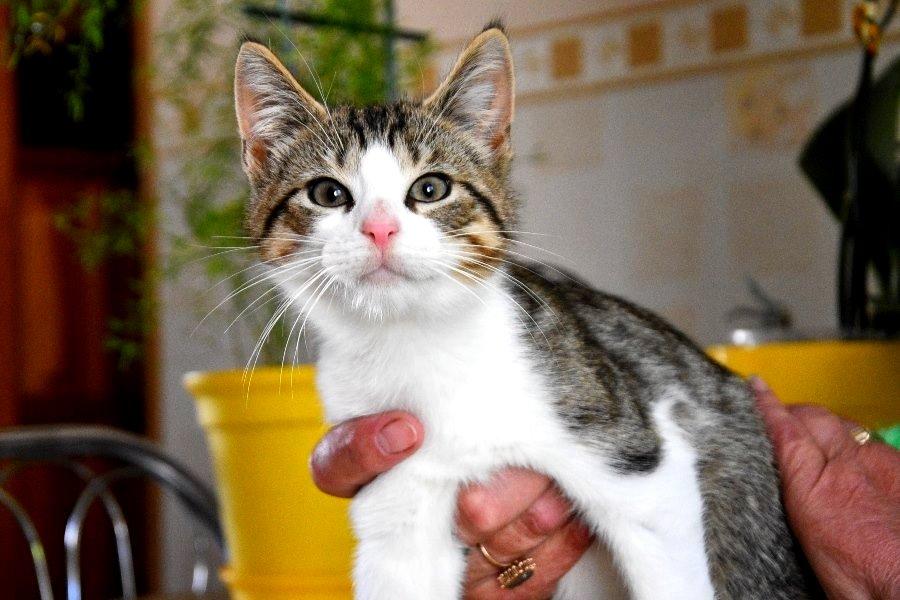 Fundacyjny Fauścik – kto przygarnie kotka