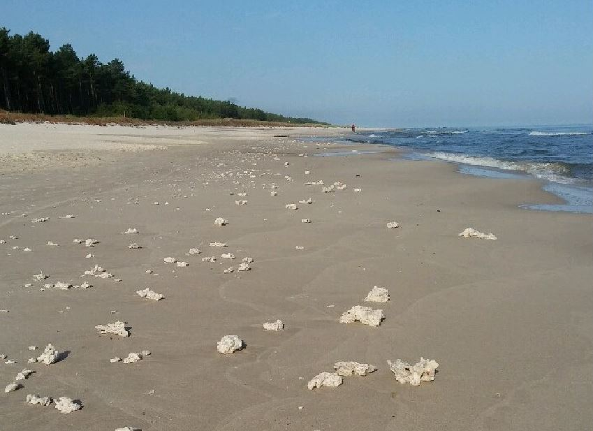 Informacja dotycząca zanieczyszczenia brzegu morskiego parafiną