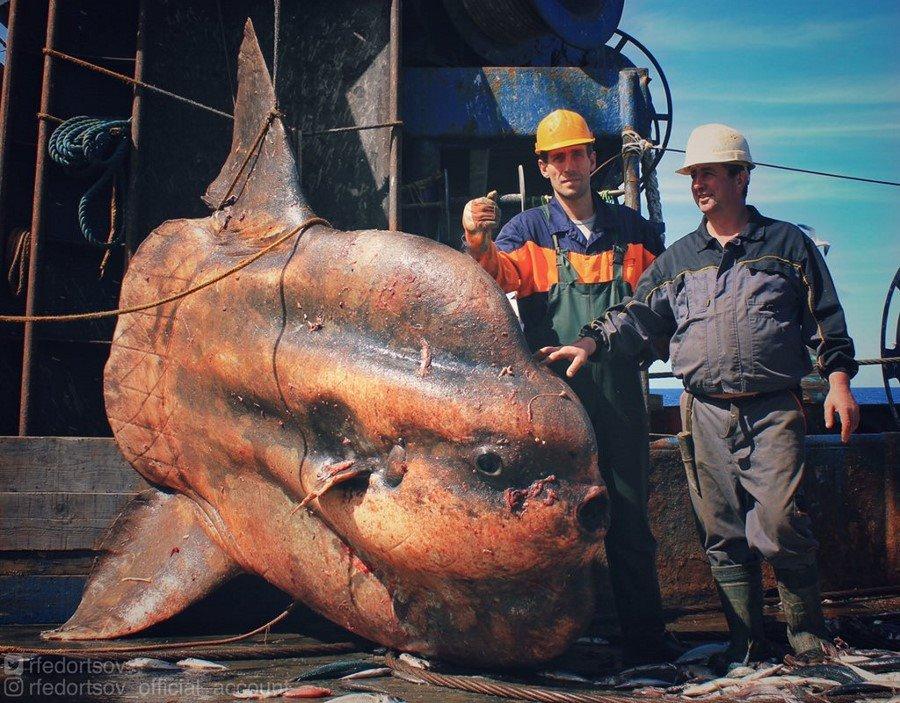 Potwory i spółka! Niesamowite zdjęcia morskich dziwolągów