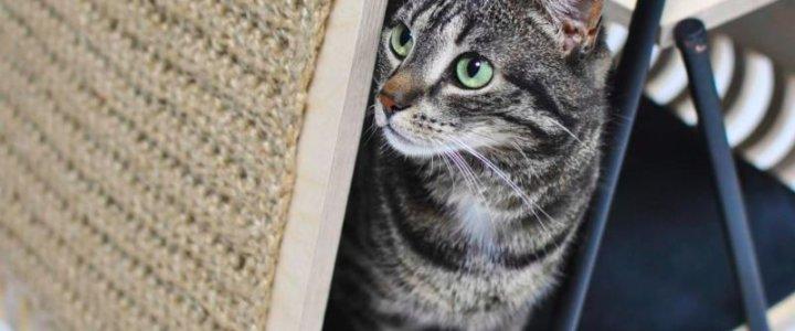 Zaprojektowała mebel dla kota. Studentka Zachodniopomorskiego Uniwersytetu Technologicznego w Szczecinie w finale konkursu