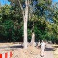 Świnoujście. Ulica Wojska Polskiego. Posadzą nowe drzewa.