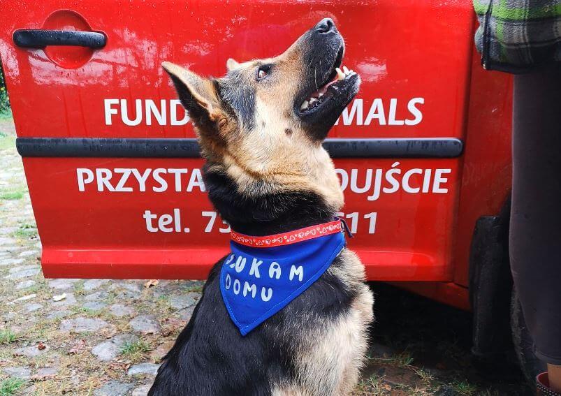 Świnoujście. Nazywam się Xsena, moje psie życie było bardzo smutne.