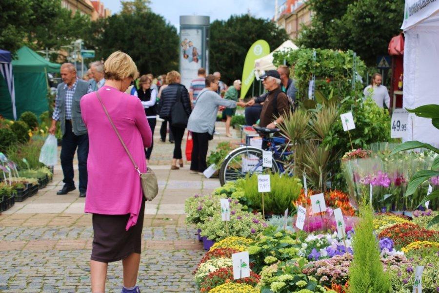 Ekologicznie, zdrowo i zielono w centrum Szczecina