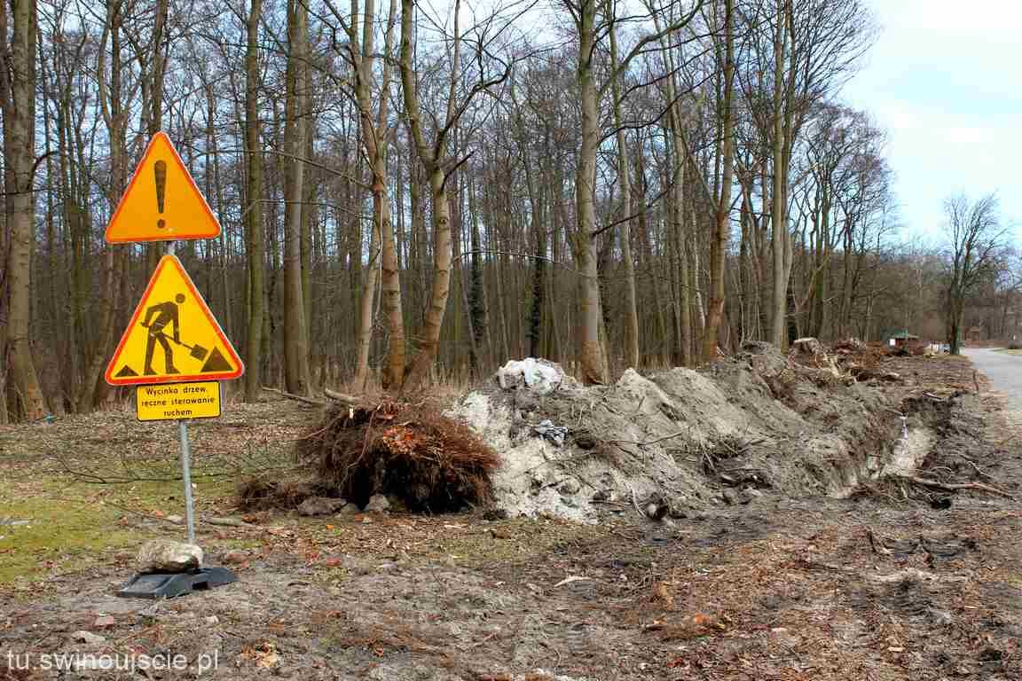 Świnoujście. Wyjaśnienie UM odnośnie wycinki drzew