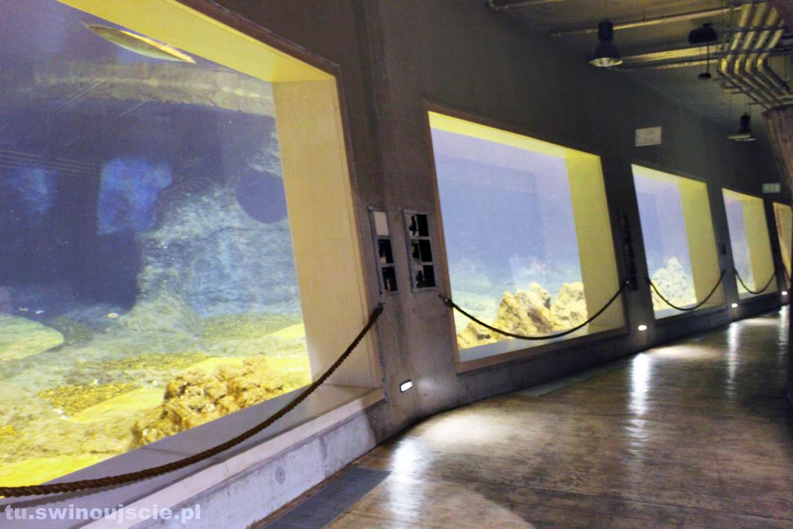 Grupa Morska za oceanarium