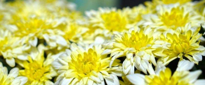 Świnoujście. Jak uzyskać pomoc za niesprzedane kwiaty z powodu pandemii.