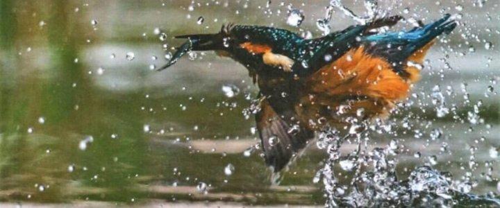 Świnoujście. Tajemnice przyrody. Wystawa fotografii Krzysztofa Chomicza