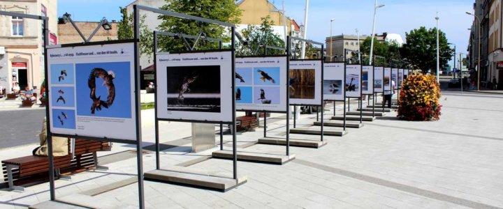plac wolności wystawa_09