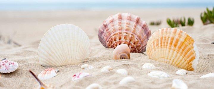 93 gramy piasku wynosi średnio każdy plażowicz po dniu nad morzem