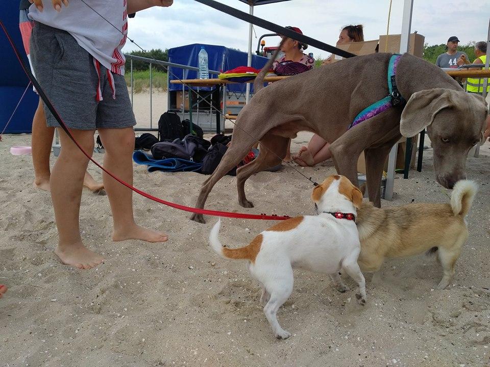 """Pierwsza impreza pn.: """"Psia plaża zaprasza"""" przeszła do historii"""